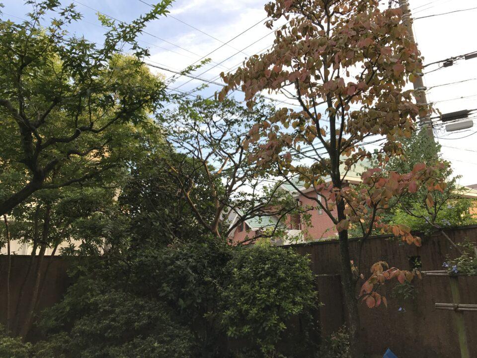 落葉樹の画像