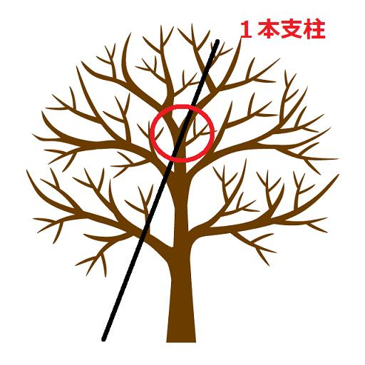 植木の添え木箇所 1本支柱