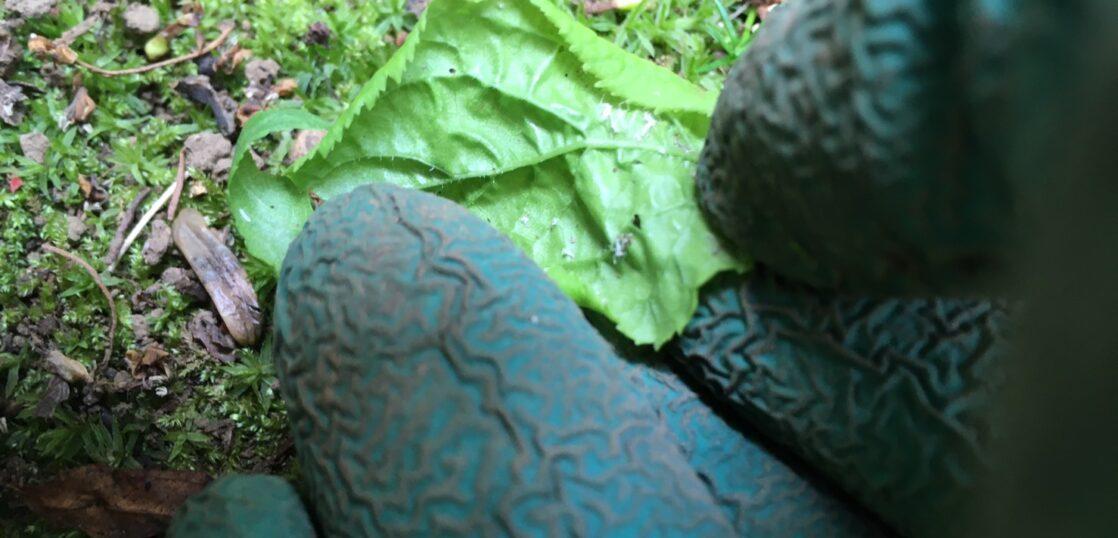 葉の裏のアブラムシ