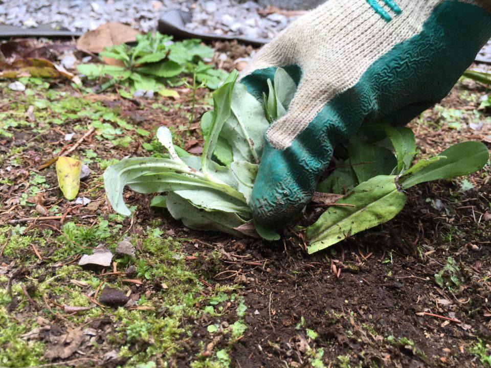 雑草の取り方の良い例