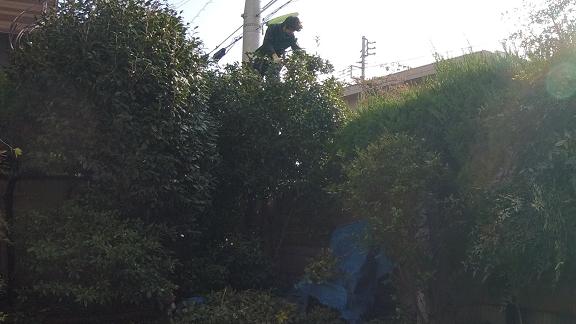garden-tree-cut