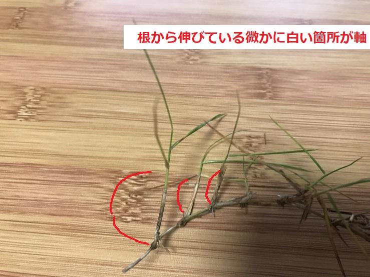 芝の軸の確認