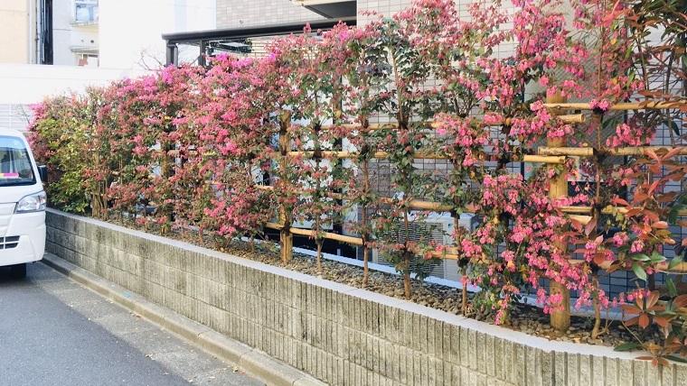 garden-tree-is-fine