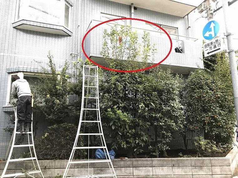 white-oak-long-branch