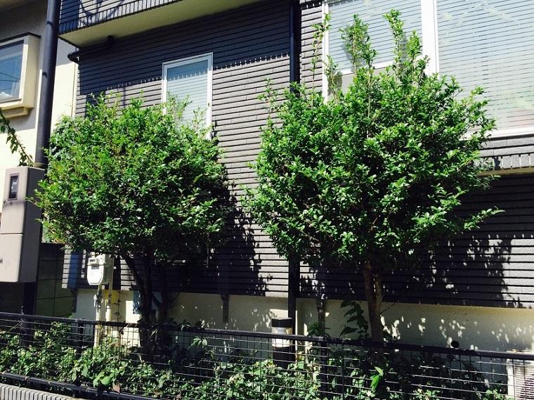 pests-on-camellia