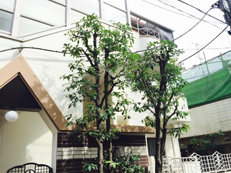 after-pruning-oak
