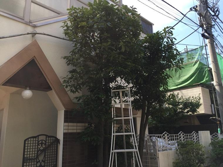 before-pruning-oak